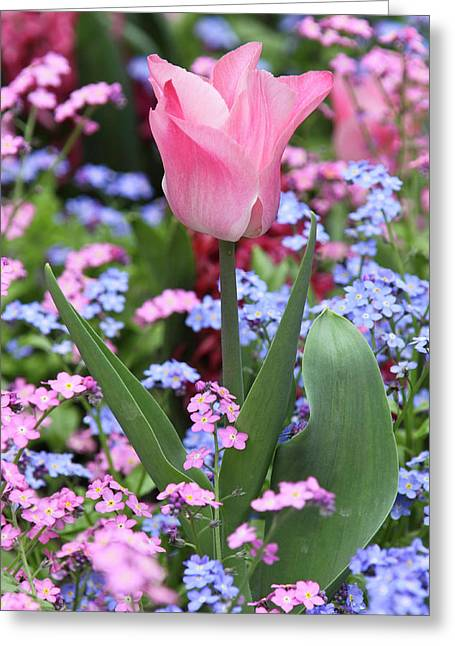 A Tulip At Luxembourg Gardens, Paris Greeting Card by William Sutton