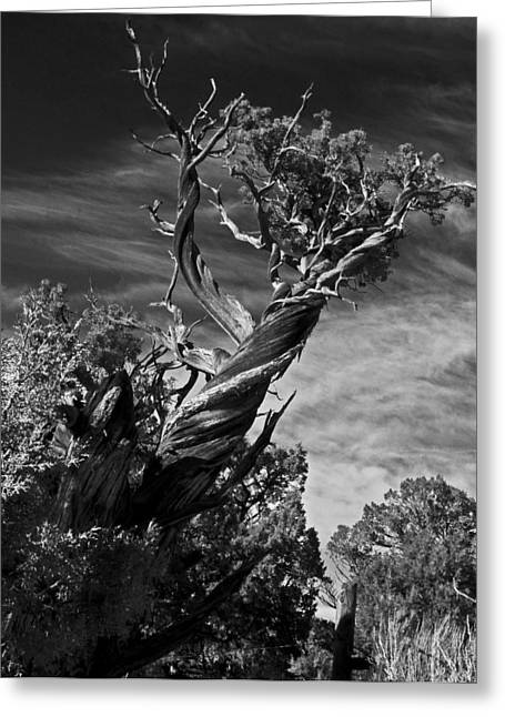 A Twisted Life  Greeting Card by Eric Rundle