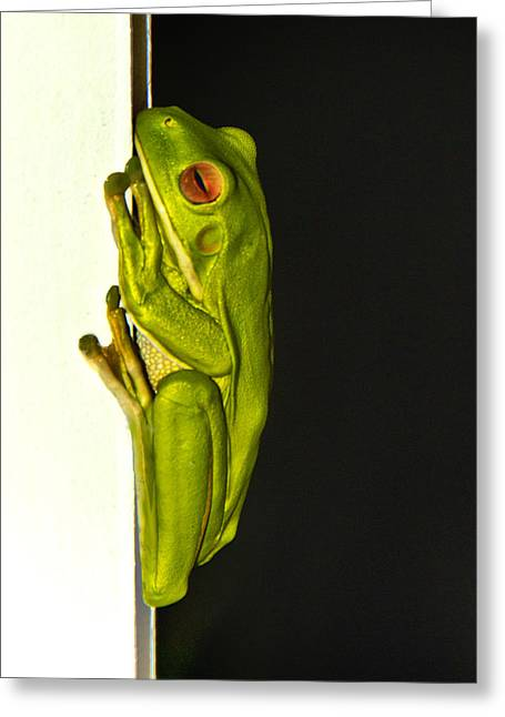 A Visit From A Giant Tree Frog Greeting Card by Debbie Cundy
