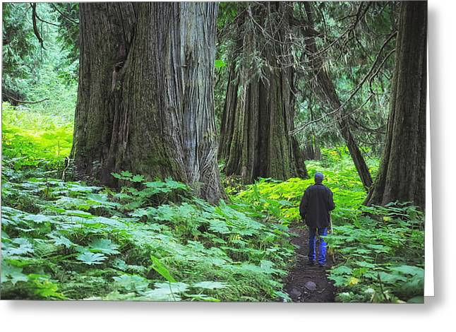 A Walk In The Ancient Forest Greeting Card by Mary Lee Dereske
