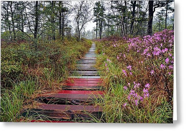 A Walk In The Heath Saco Maine Greeting Card by Jeff Sinon