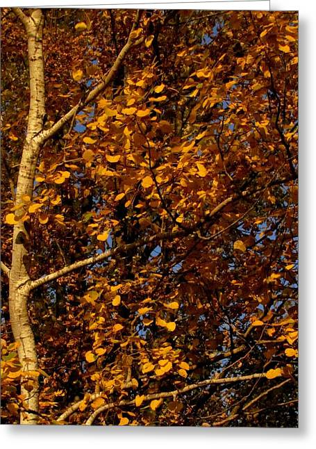 A Walk In The Park - Birch Greeting Card