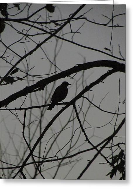 A Walk In The Park - Bird Greeting Card