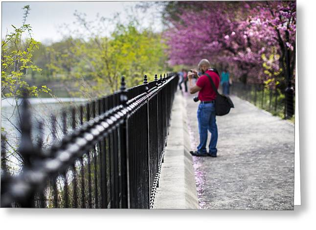 A Walk In The Park Greeting Card by Chris Halford