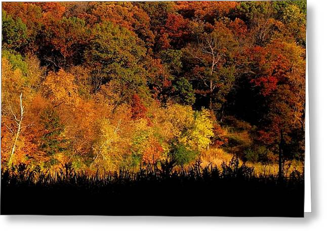 A Walk In The Park - Sunset In Autumn Greeting Card