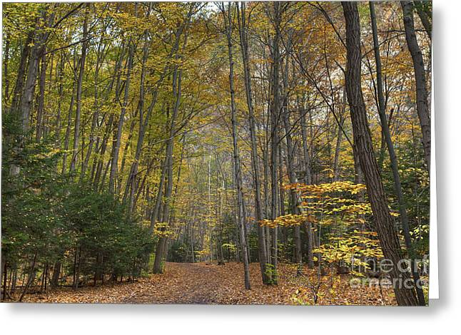 A Walk In The Woods II Greeting Card by Michele Steffey