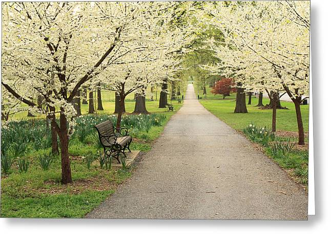 Greeting Card featuring the photograph A Walk In Tower Grove by Scott Rackers