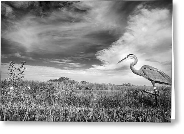 A Walk On The Wild Side Greeting Card by Mark Andrew Thomas