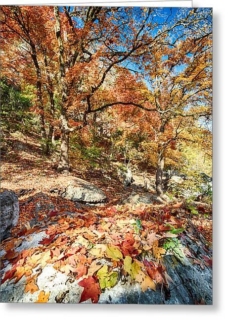 A Walk Through The Maple Trail Greeting Card