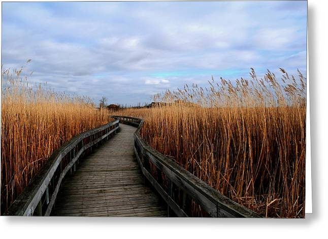 A Walk Through The Phragmites Greeting Card