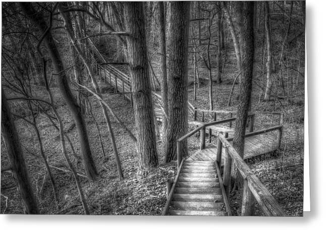 A Walk Through The Woods Greeting Card by Scott Norris