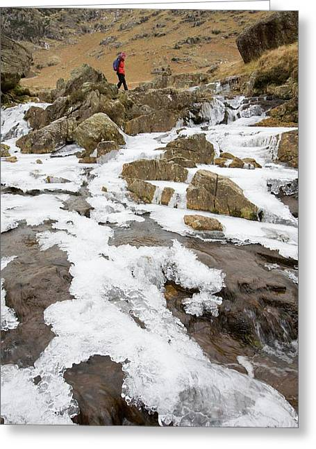 A Walker Crosses A Frozen Beck Greeting Card by Ashley Cooper