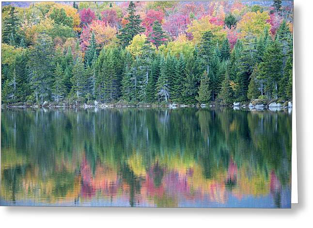 A Wall Of Evergreens Shield Colorful Greeting Card by Robbie George