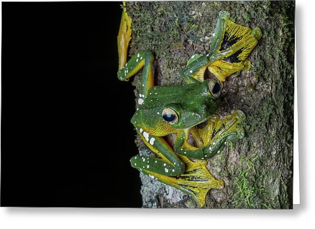 A Wallaces Flying Frog, Rhacaphorus Greeting Card