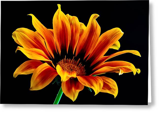 Greeting Card featuring the photograph A Waving Flower by Marwan Khoury