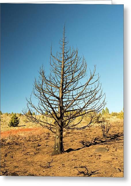 A Wild Fire Near Hawkins Peak Greeting Card by Ashley Cooper