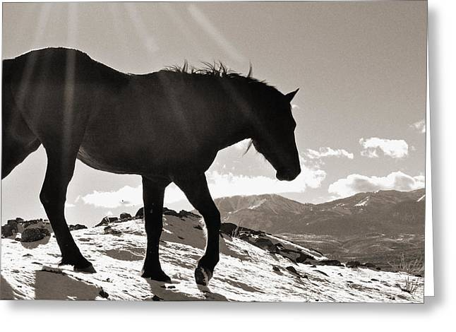 Greeting Card featuring the photograph A Wild Horse In The Mountains by Lula Adams