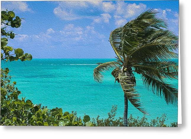 A Windblown Palm Greeting Card by John M Bailey
