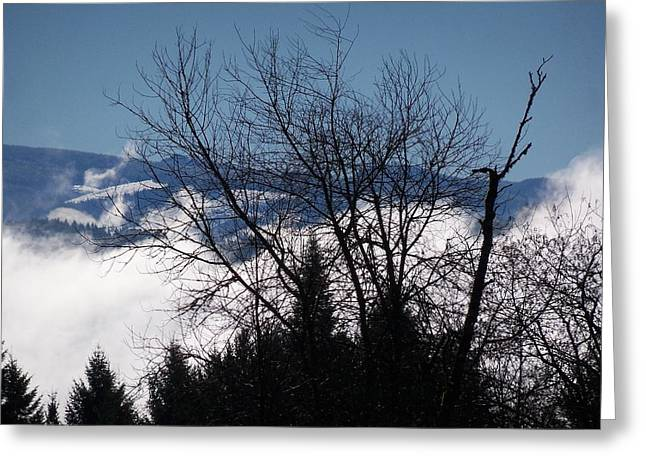 A Winter Day Reaching For The Sky Greeting Card