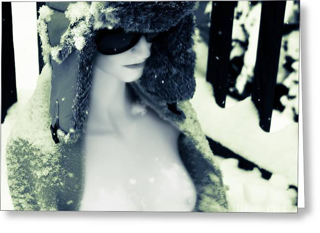 A Winter Pale  Greeting Card by Steven Digman