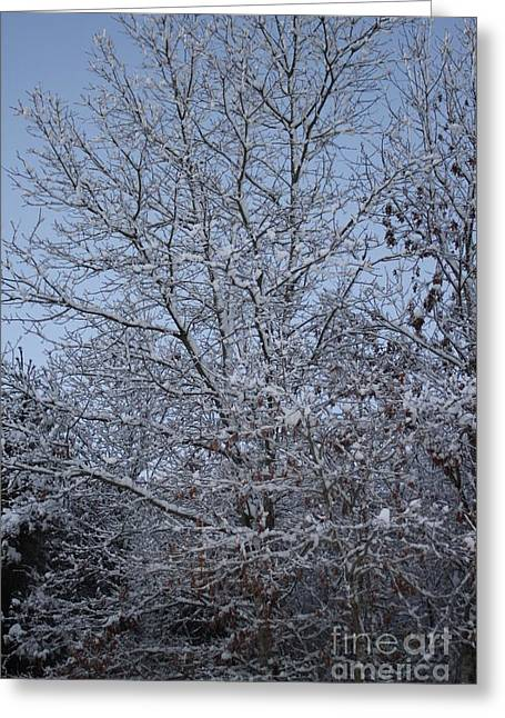 A Winter's Day Greeting Card