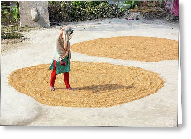 A Woman Drying Her Rice Crop Greeting Card