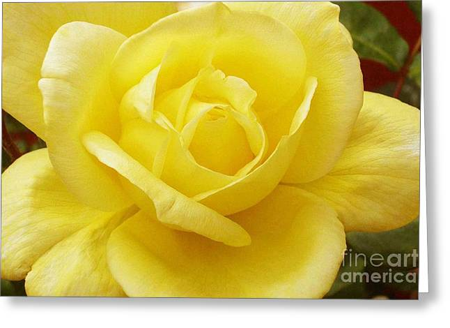A Yellow Rose Greeting Card by Paul Clinkunbroomer