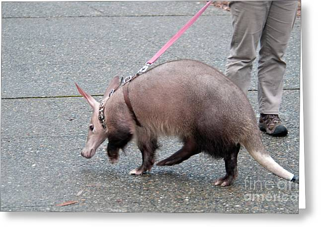 Aardvark On A Leash Greeting Card by Mark Newman