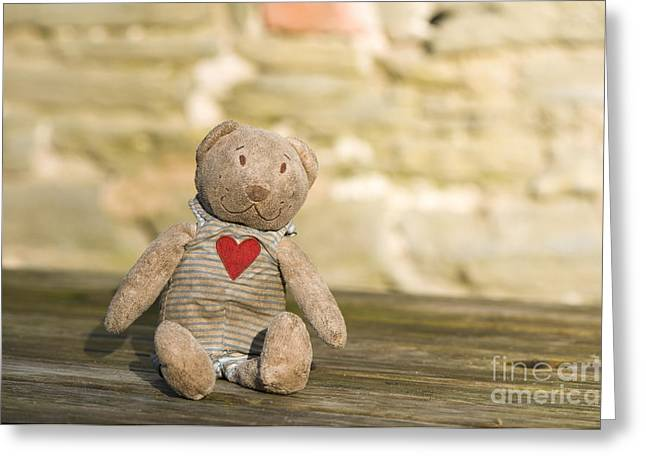 Abandoned Bear Greeting Card by Anne Gilbert