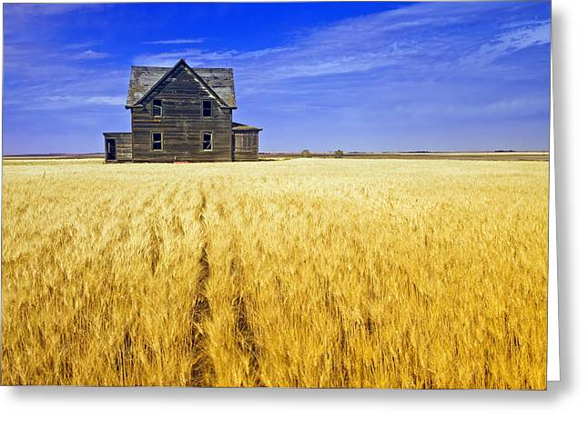 Abandoned Farmhouse Greeting Card by Dave Reede