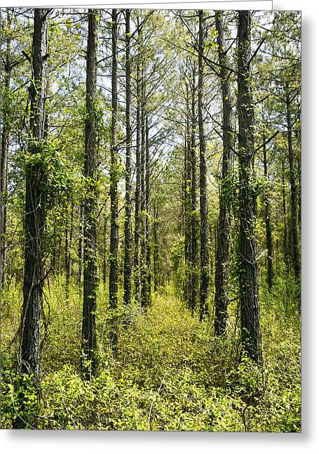 Abandoned Forest In Scott Arkansas Greeting Card