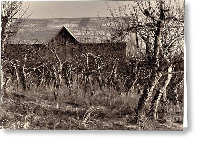 Abandoned Apple Orchard Greeting Card by Henry Kowalski