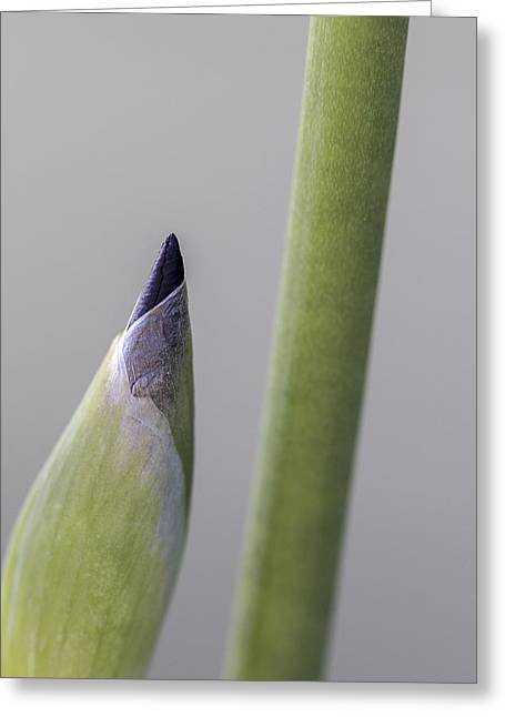 About To Unfurl Greeting Card