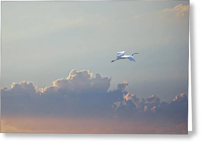 Above It All Greeting Card by Adele Moscaritolo