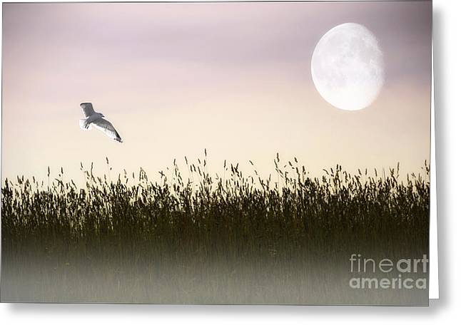 Above The Tall Grass Greeting Card by Tom York Images