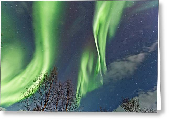 Above The Trees Greeting Card by Frank Olsen