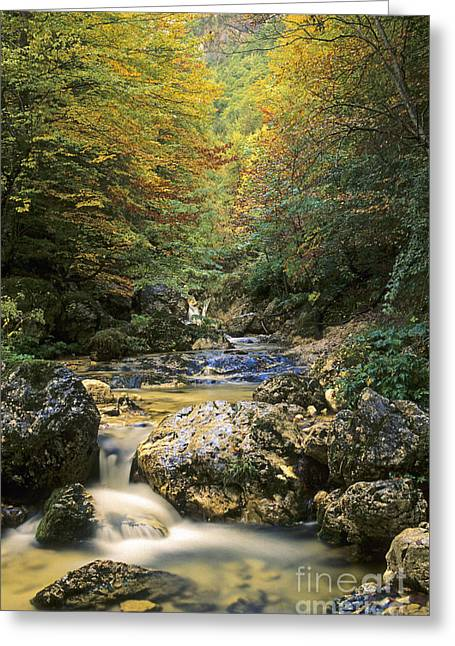 Abruzzo National Park In Italy Greeting Card by George Atsametakis