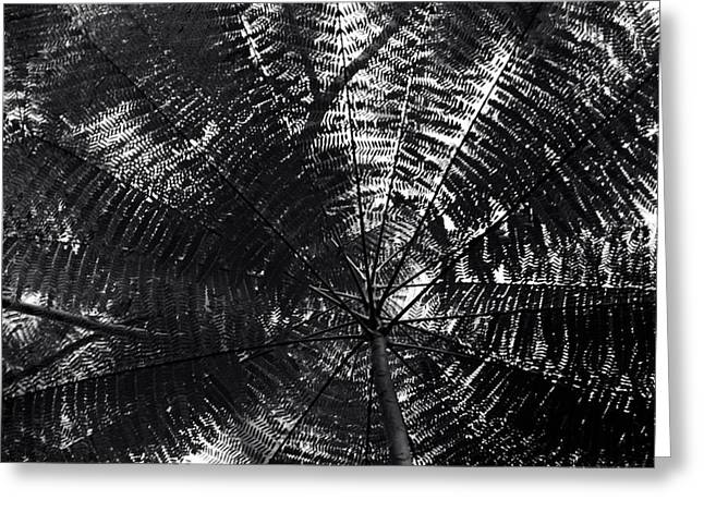 Greeting Card featuring the photograph Abstract by Amarildo Correa