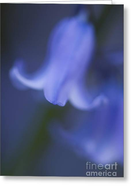 Abstract Bluebell Greeting Card by Anne Gilbert