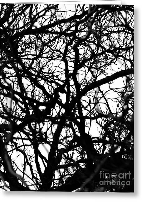 Abstract Branches Greeting Card by Robert Yaeger