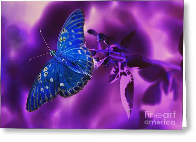 Abstract Butterfly Greeting Card