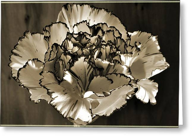 Abstract Carnation Greeting Card by Terence Davis