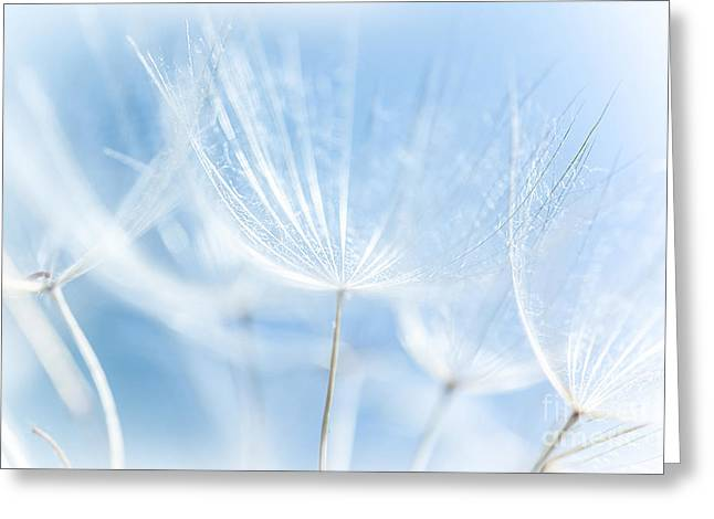 Abstract Dandelion Background Greeting Card by Anna Om
