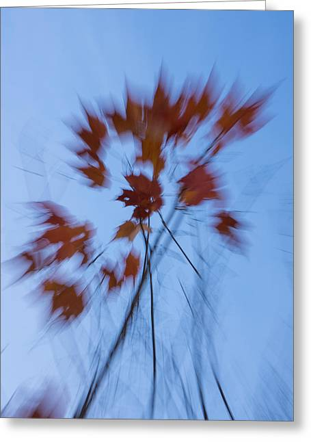 Abstract Impressions Of Fall - The Song Of The Wind Greeting Card by Georgia Mizuleva