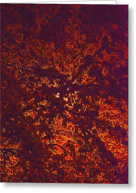 Abstract In Snow And Leaves Greeting Card by Michael Fox