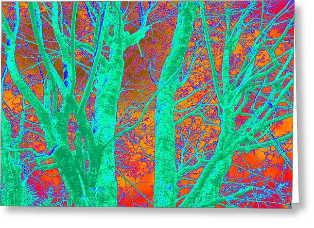 Abstract Maplei Greeting Card by Kathy Sampson