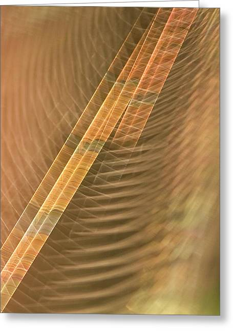 Abstract Of Spider Web In Redwood Greeting Card by Phil Schermeister