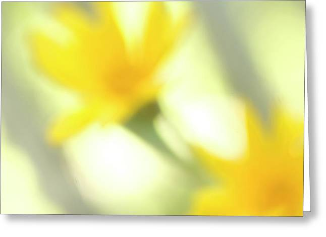 Abstract Of Wildflower In Early Morning Greeting Card