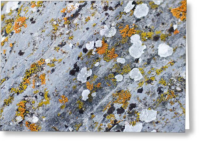 Abstract Orange Lichen 2 Greeting Card by Chase Taylor