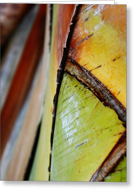 Greeting Card featuring the photograph Abstract Palm 2 by Heather Green